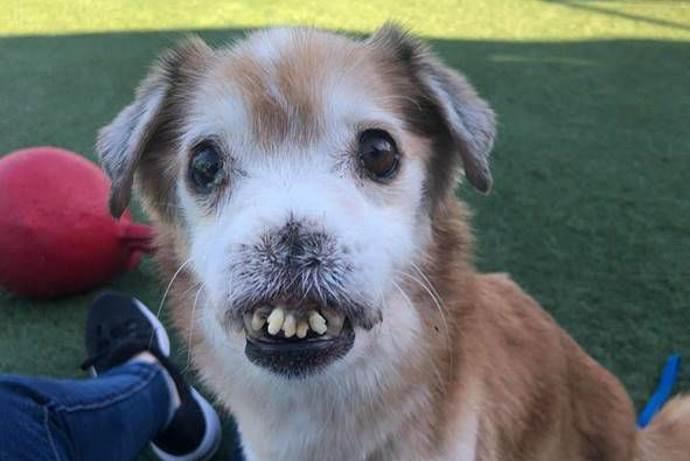 cane-senza-naso