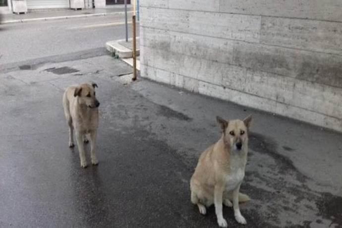 cani-ospedale