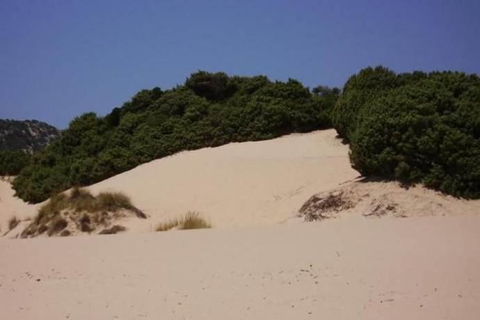 dune-chia