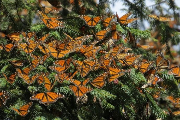 santuario delle farfalle