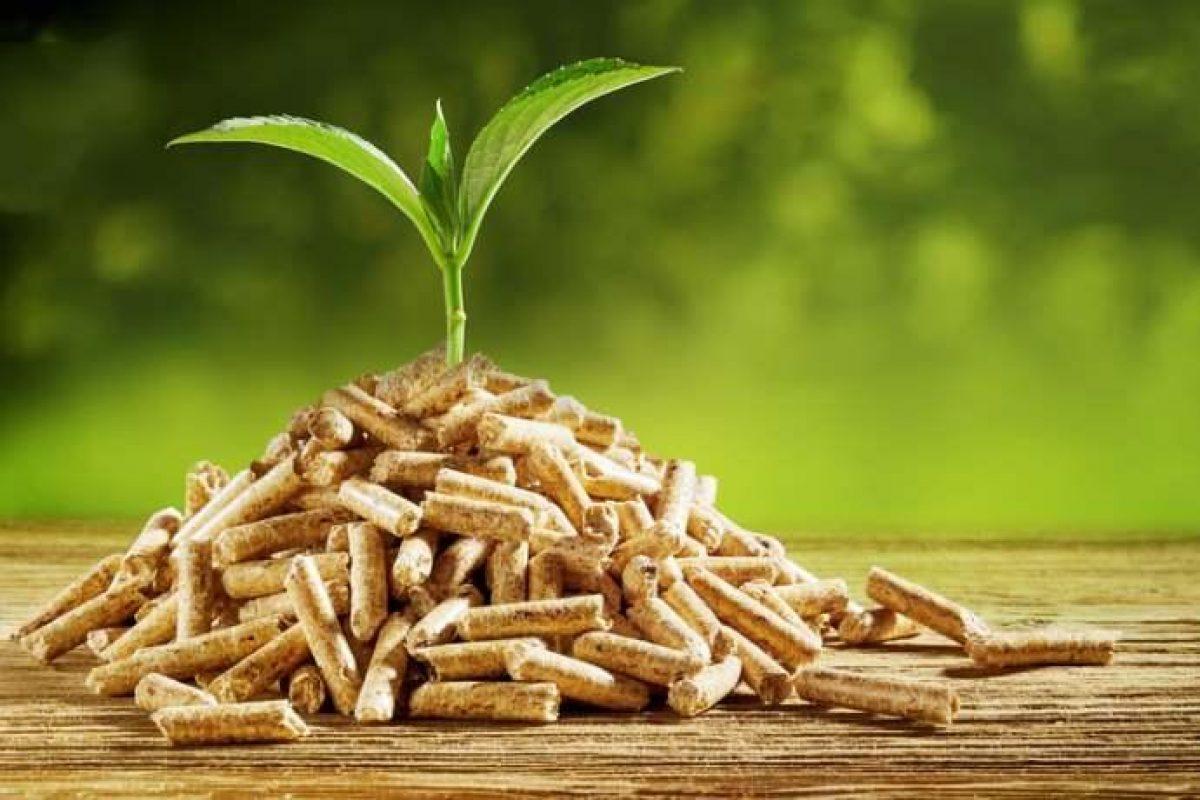 Cenere Di Pellet Nell Orto come riutilizzare gli scarti del giardino (sfalci e potature