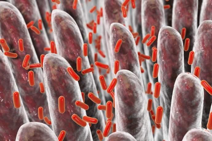 batteri 150mila catalogo 5mila specie