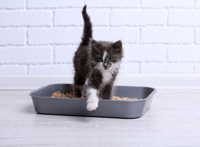 bicarbonato gatti