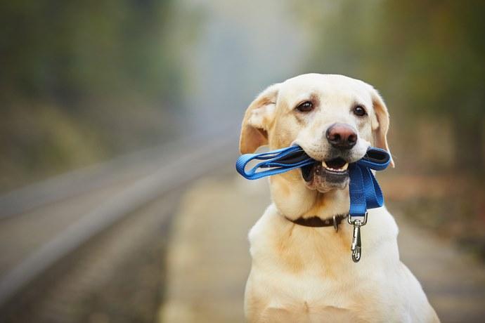 cane crusca