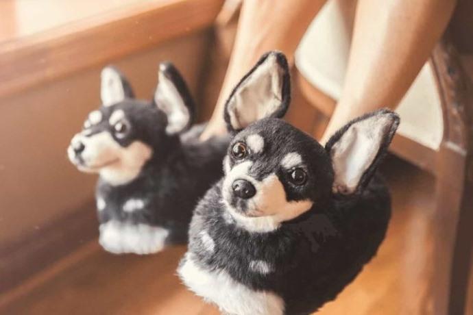 ciabatte cani