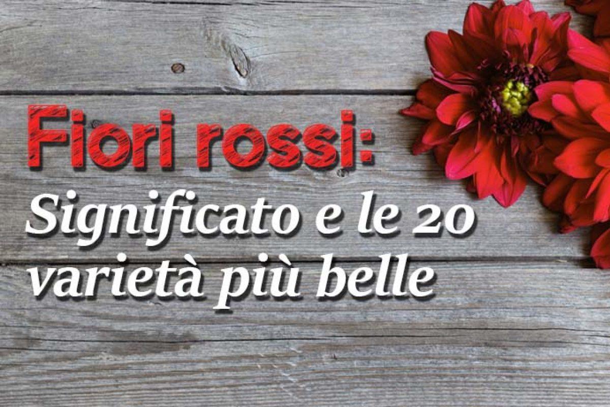 Fiori Bianchi E Gialli Nomi.Fiori Rossi Significato E Le 20 Varieta Piu Belle Greenme It