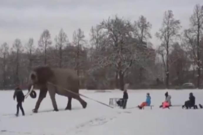 elefante-slitta