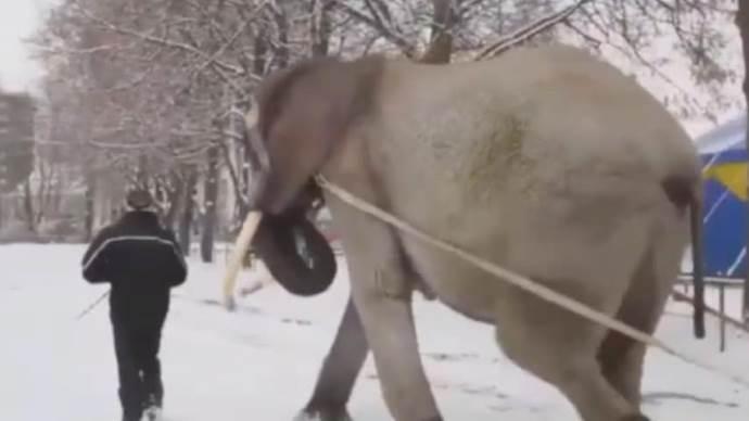 elefante slitta1