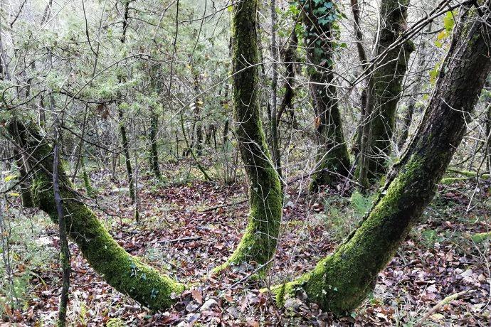 Oasi naturale Umbria