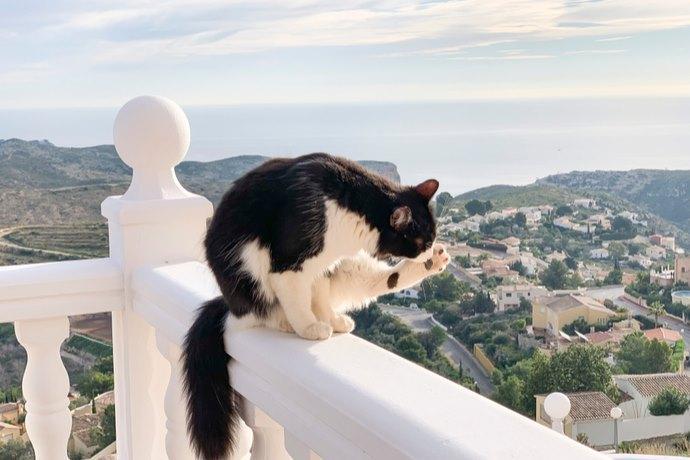 gatto balcone