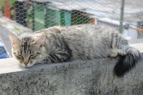 gatto cornicione