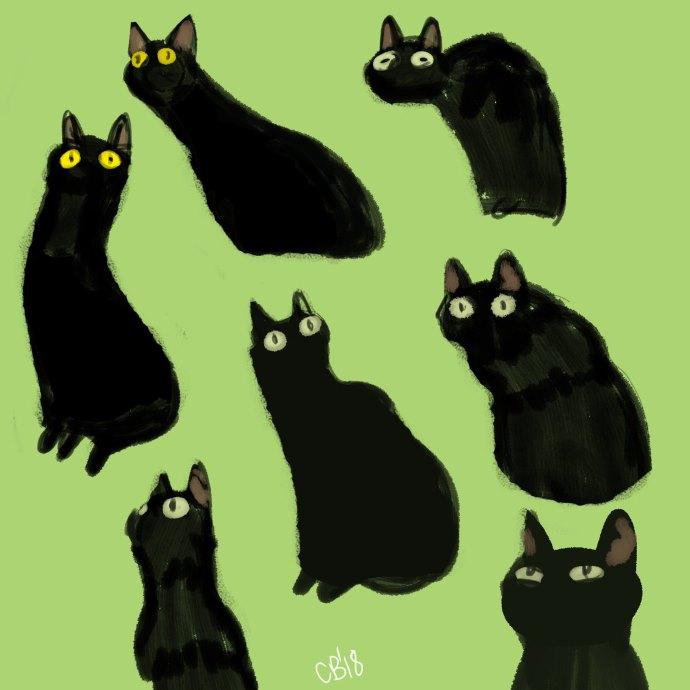 gatto sinfonia