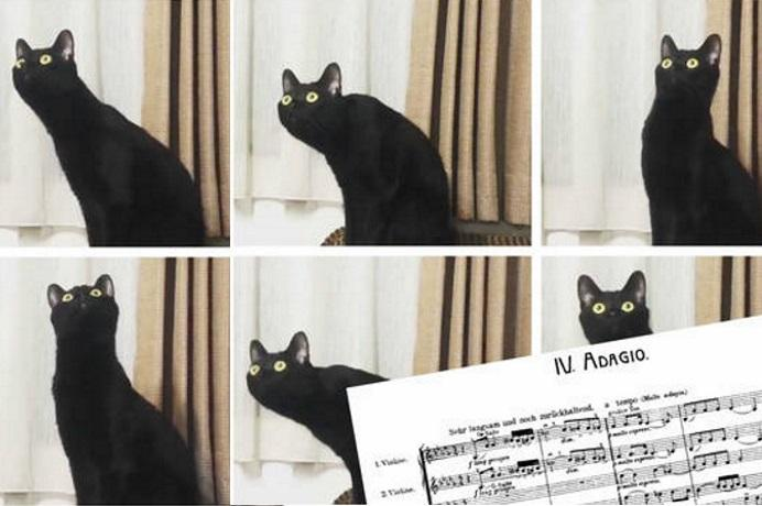 gatto Mahler
