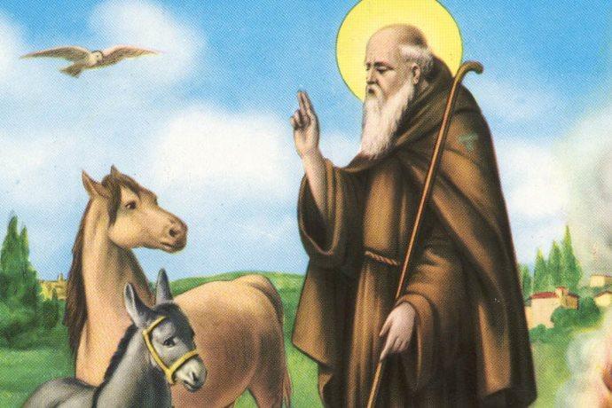 sant-antonio-abate-animali-17-gennaio