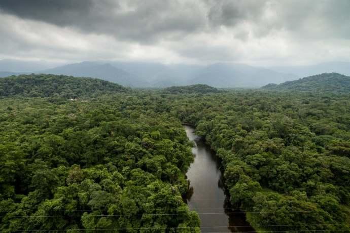 8 miliardi di alberi