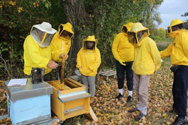 api studio pesticidi