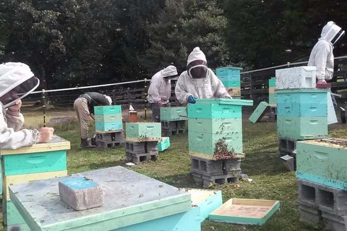 apicoltori appalachi