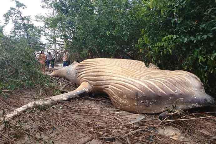 balena-spiaggiata-foresta