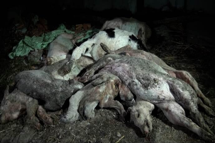 carcasse_animali
