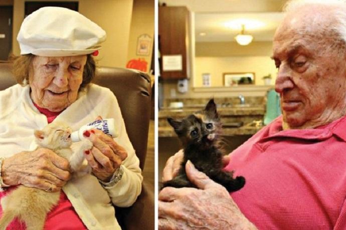 gatti e anziani