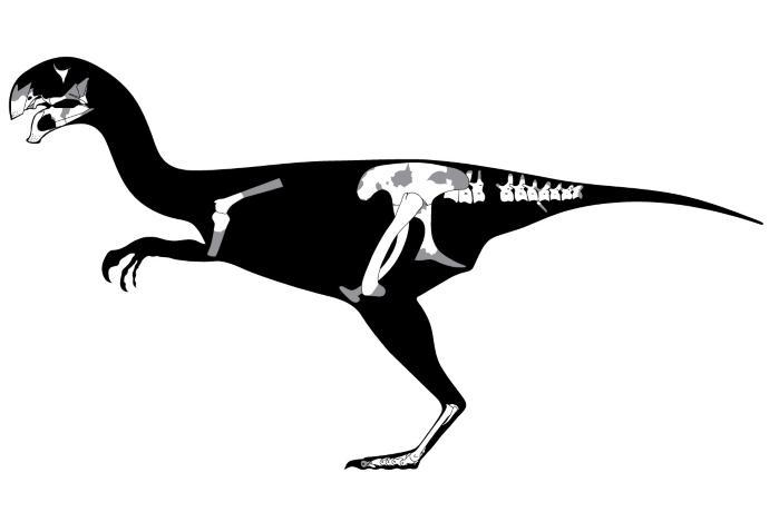 dinosauro sdentato mongolia