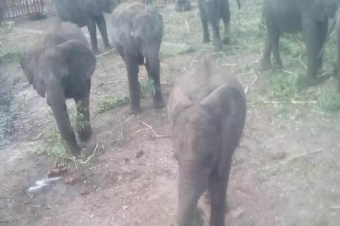 elefanti zoo