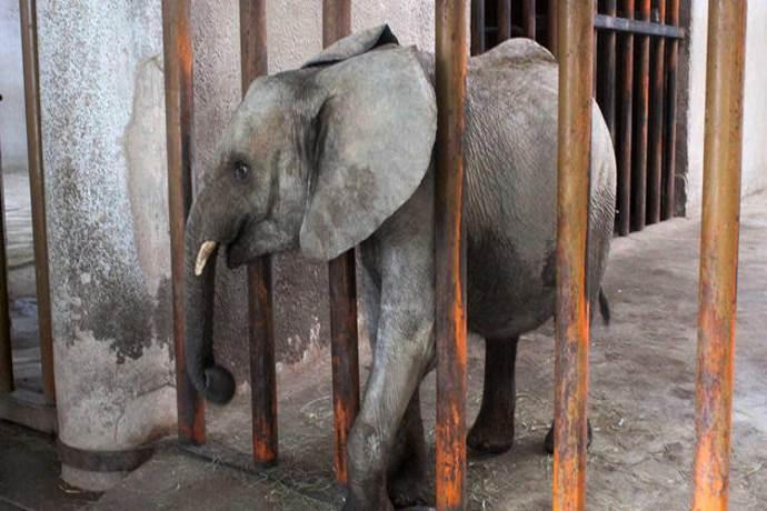 elefanti-zoo