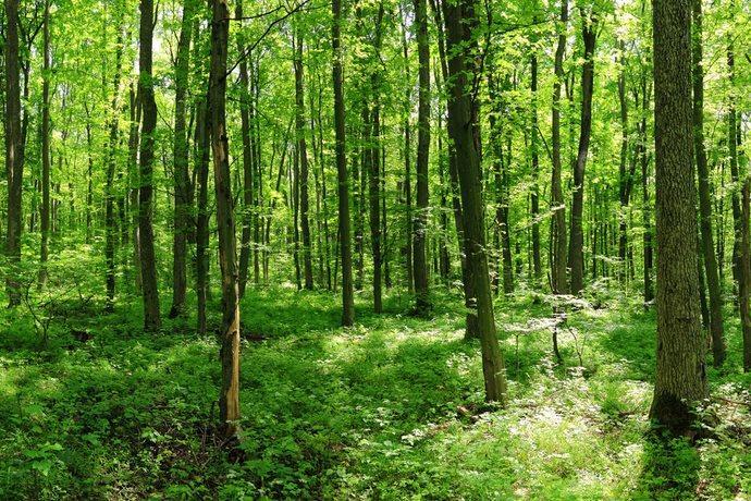 piantare-alberi-co2
