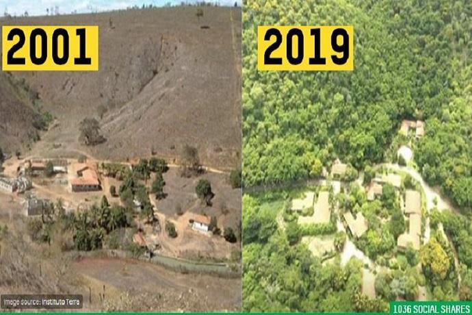 salgado riforestazione