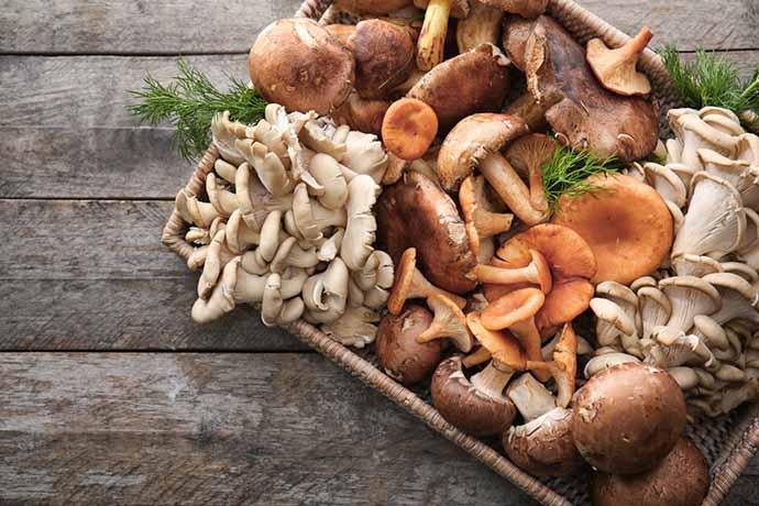 funghi-longevita