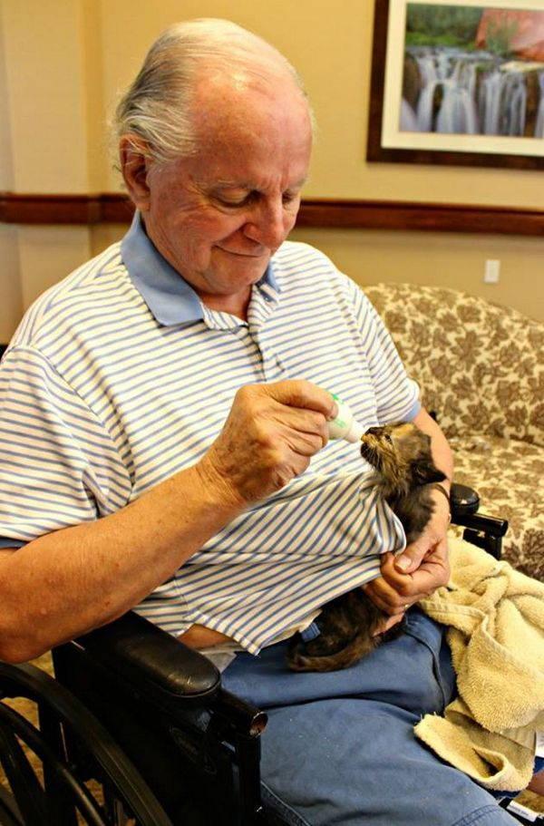 gatti e anziani 2