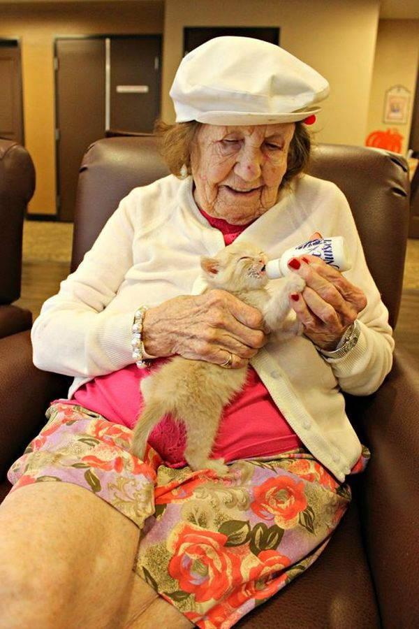gatti e anziani 4