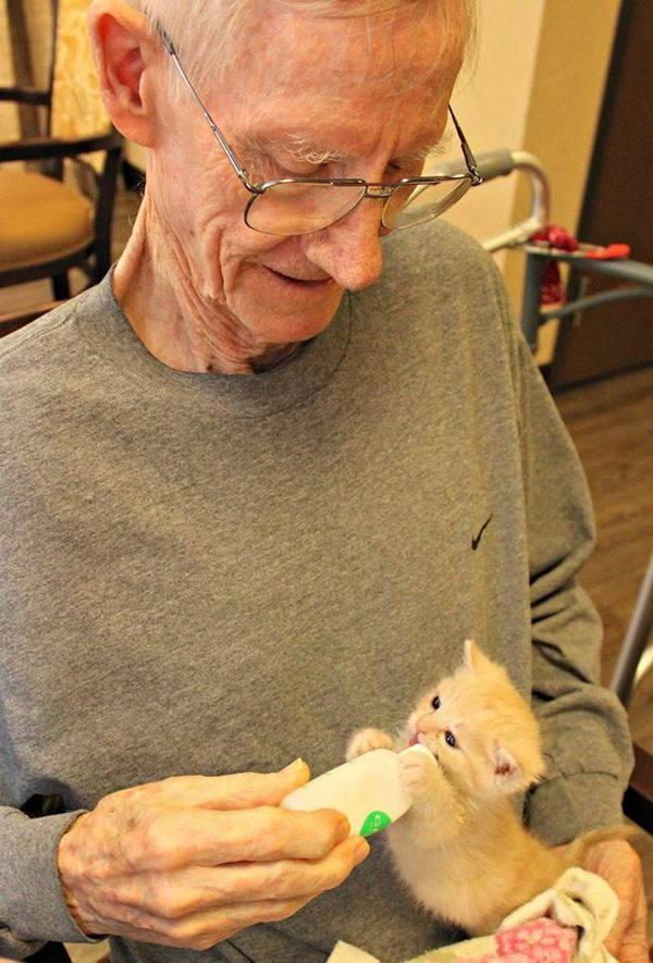 gatti e anziani 5