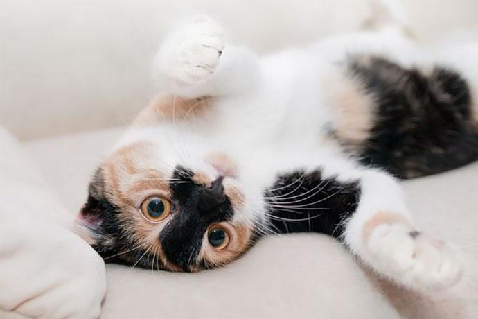 gatto-carattere-proprietario