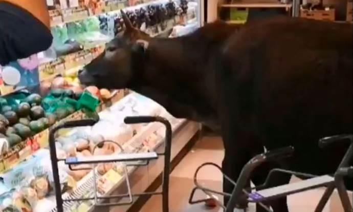 mucche supermercato
