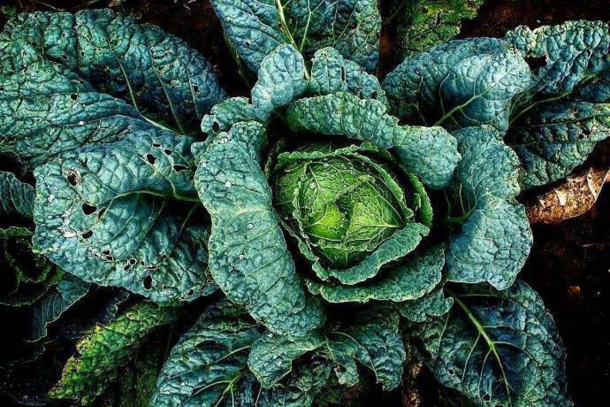 Cosa Piantare A Febbraio mese di febbraio: semina, raccolto e lavori nell'orto