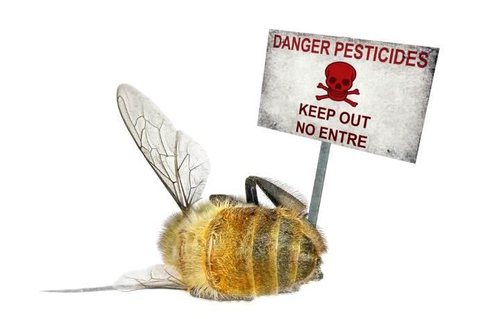 pestici-api