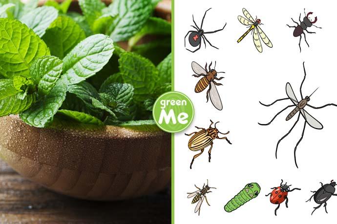 pianta-anti-insetti