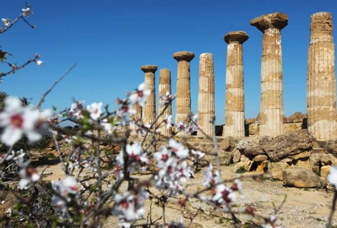 sagra mandorlo sicilia fiore 1208