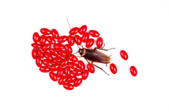 scarafaggio-san-valentino