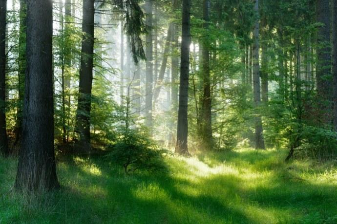 alberi CO2
