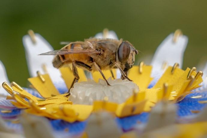 api fiori stampati in 3D