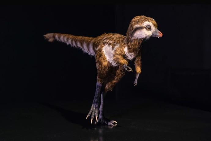 cucciolo di T-rex