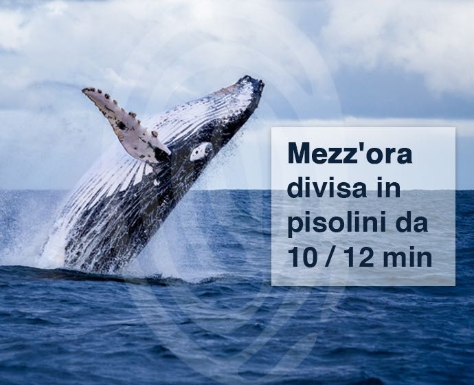 balena sonno