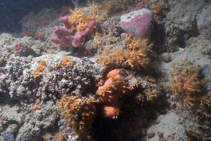barriera corallina Bari