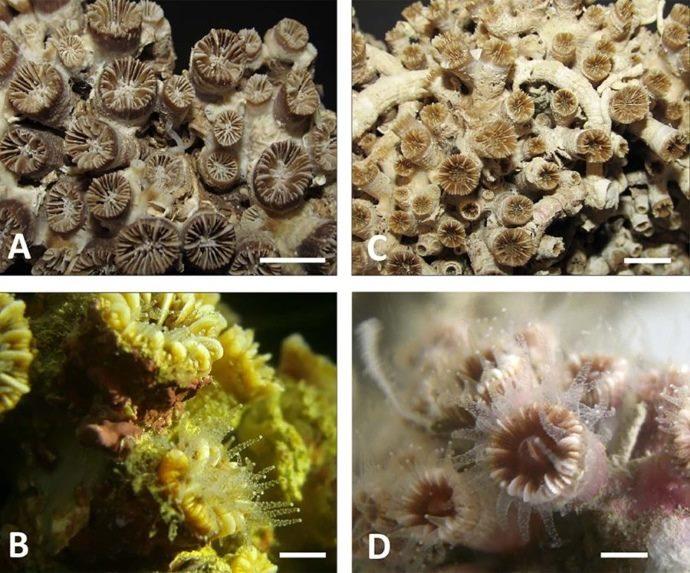 barriera corallina monopoli2