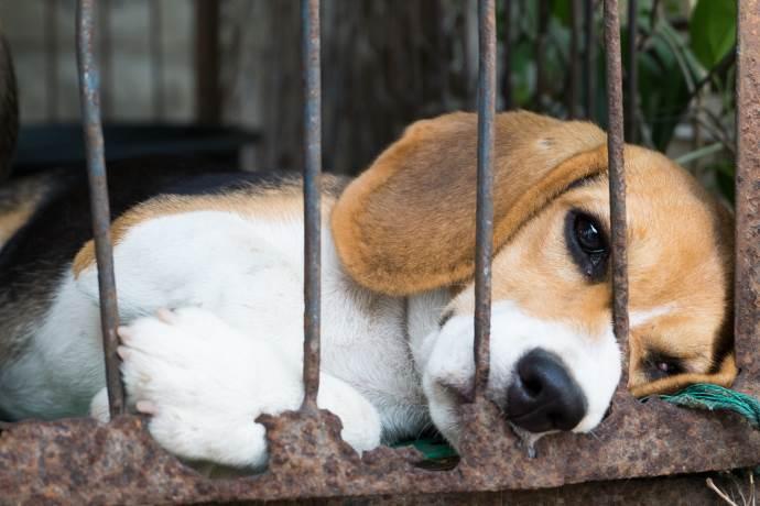 beagle esperimenti