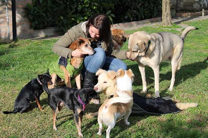 volontaria-cani