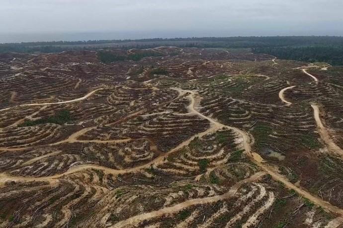 deforestazione Papua Nuova Guinea