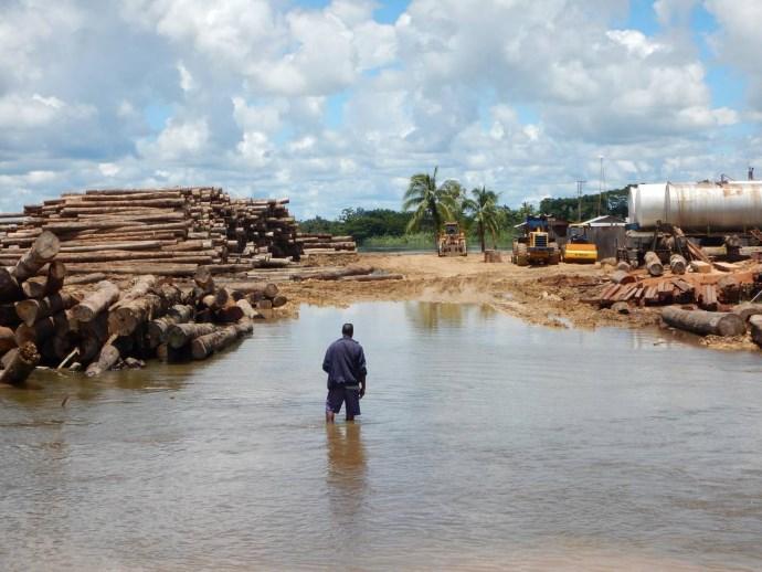 deforestazione papua2